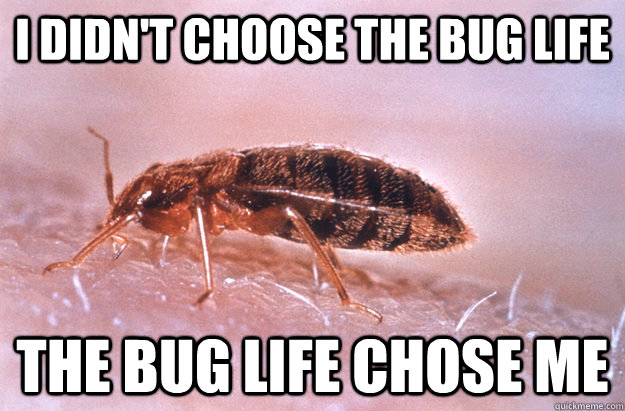 bed bug meme 6 exciting bed bug facts & tips venus pest company