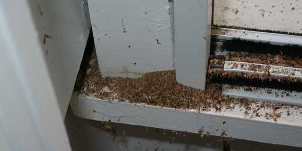 3 Signs Of Carpenter Ants